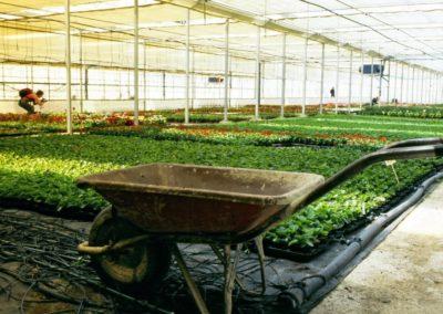 Invernaderos por dentro. JOSE MIGUEL OZCARIZ (Tafalla)